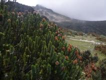 Los Ilinizas, Ecuador, paramo landscape
