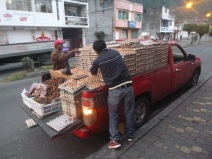 Transportation of eggs, Ecuador