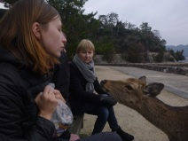 Miyajima island, hungry deer looking for sweets, Japan